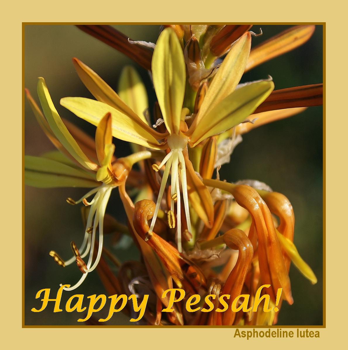 Happy Pessah!
