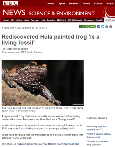 Hula painted frog