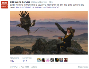 Tweet eagle hunting Mongolia
