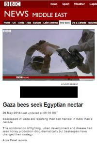 Bees Gaza BBC