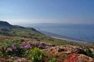 BBC World Service reduces Golan Heights population by a third