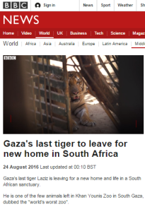 tiger report
