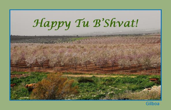 tu-bshvat-17