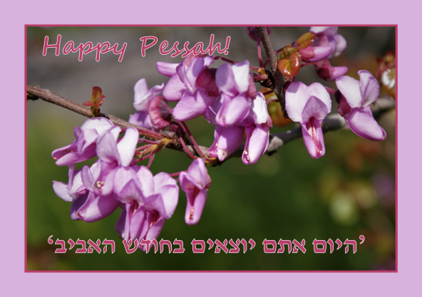 Happy Pessah, Happy Easter